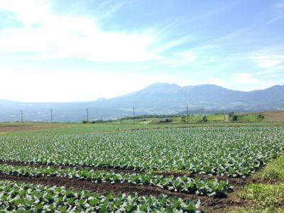 嬬恋キャベツ高原