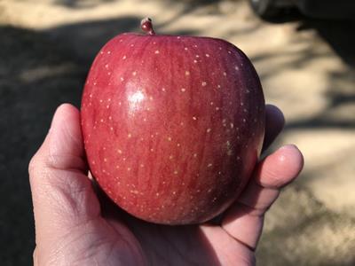 浜松シティマラソンのりんご