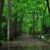 雨の日のランニングで注意したい走り方とその対策