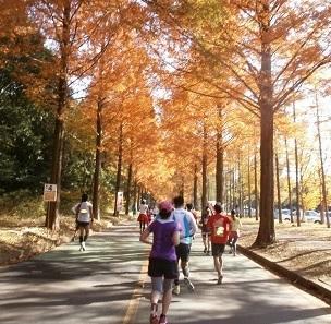 つくばマラソンのコース攻略!秋の高速コースを制して自己ベストを目指せ!